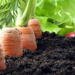 ilustrasi - pertanian organik