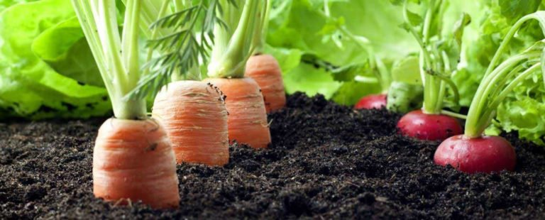 4 Prinsip Utama Pertanian Organik