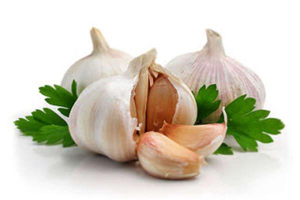 ilustrasi -manfaat bawang putih