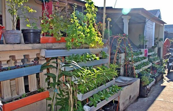 ilustrasi - tanaman pekarangan