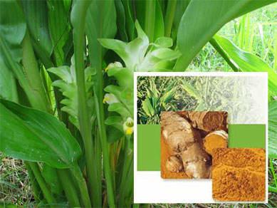Budidaya tanaman obat dipekarangan rumah pertanian