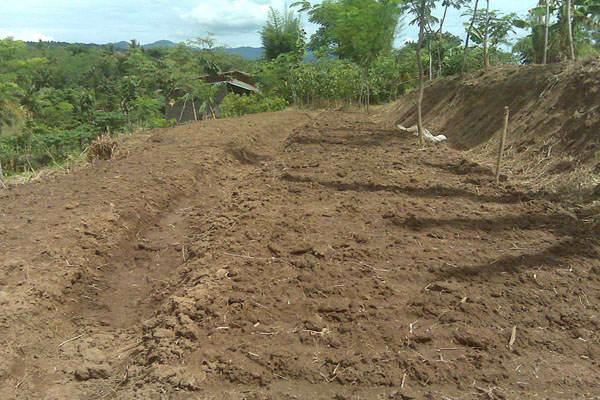 ilustrasi - persiapan lahan untuk budidaya bawang merah
