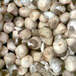 ilustrasi - budidaya jamur merang