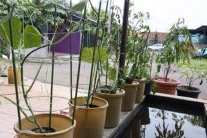 Cara Bercocok Tanam Hidroponik yang Benar